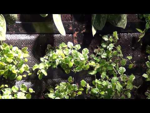 Cultilène op Gevel2012 - groene gevel