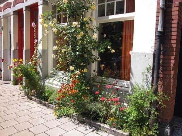 Beste planten voor in een geveltuin tuin en balkon for Tuin beplanten