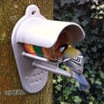 vetbollen - vogels voeren met pindakaas mees