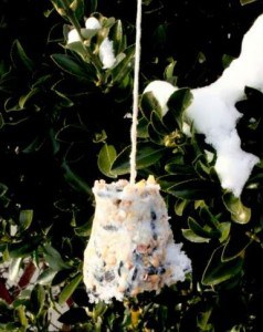 zelf vetbollen maken voor vogels in de winter - in de boom