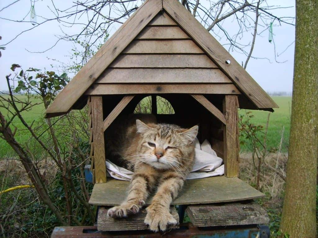 The Cat House Lincoln Facebook