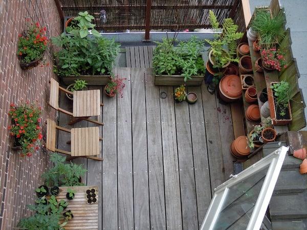 Boom In Pot Op Balkon.De Beste Planten Voor Op Je Balkon Tuin En Balkon