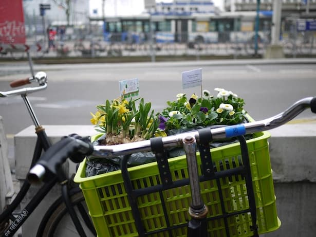 dutch-bicycle-garden-11