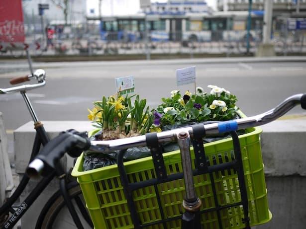 dutch-bicycle-garden-11