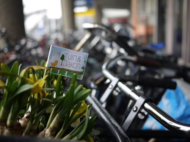 dutch-bicycle-garden-8