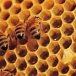 bijen-in-graat