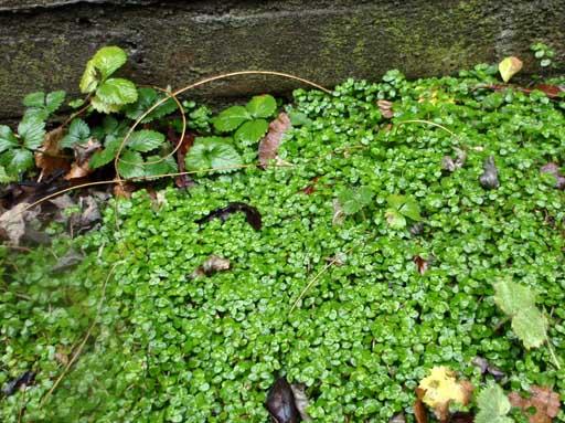 Hoe maak ik een mostapijt in mijn schaduwtuin?  Tuinvraag  Tuin en ...