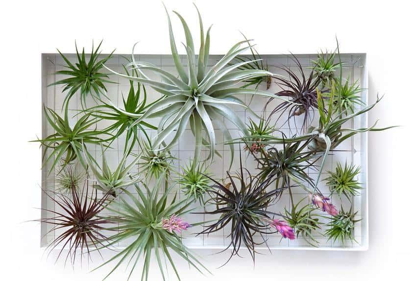 ... verschillende vormen van u2018huis-tuin-en-keukenu2019 verticale tuinen