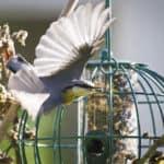 Dierenleven in je tuin: ook in de winter