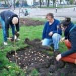 Mobiele moestuinen op Westplein in Utrecht