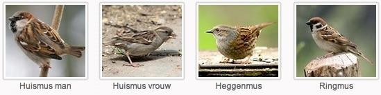 Van tevoren oefenen kan via de website van de Vogelbescherming
