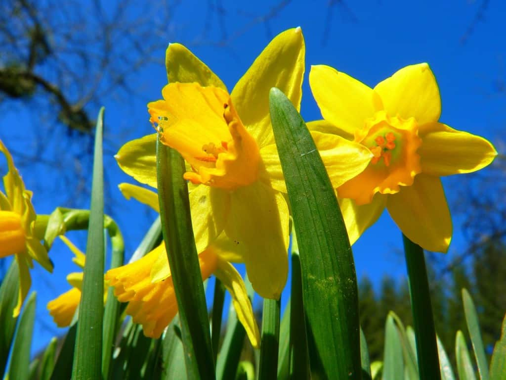 Zeven tips voor low budget tuinieren tuin en balkon for Images du printemps gratuites