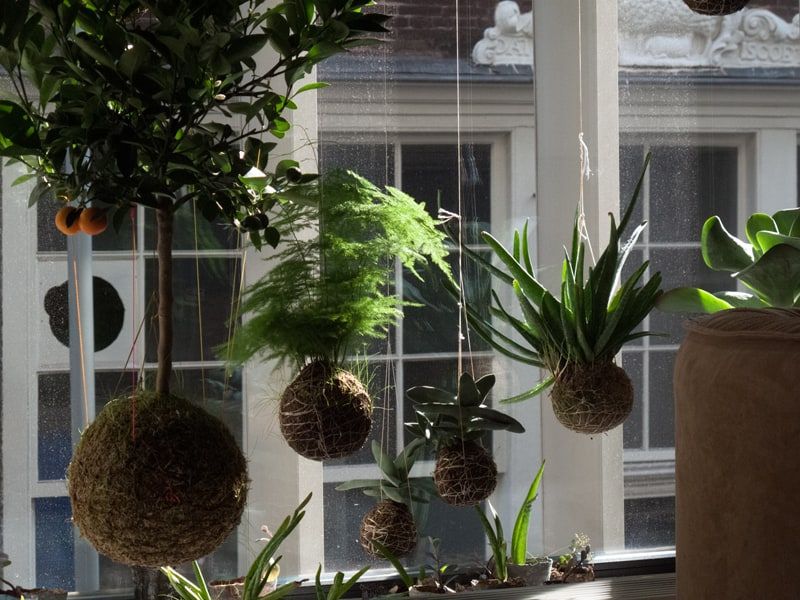 string gardens hangende planten uit amsterdam tuin en balkon. Black Bedroom Furniture Sets. Home Design Ideas