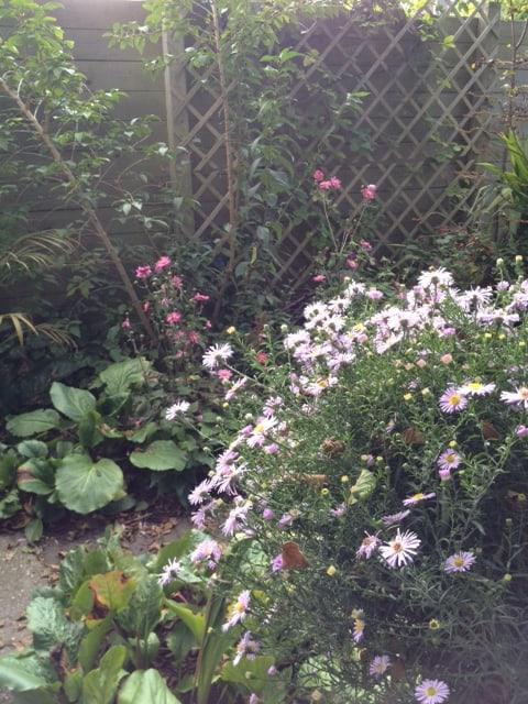 Hoe mooi is je tuin nog in de herfst?