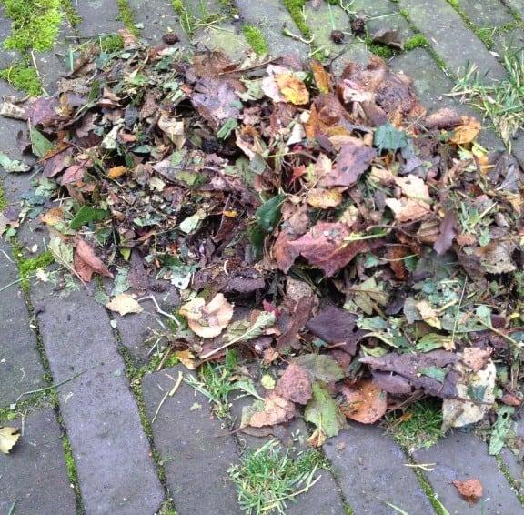 Bladcompost van oud blad maken