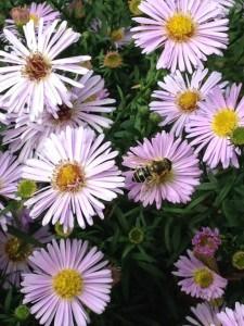 bijen in de tuin