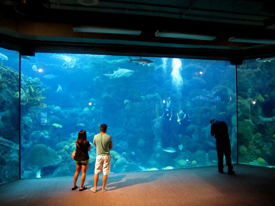 aquarium hornbach