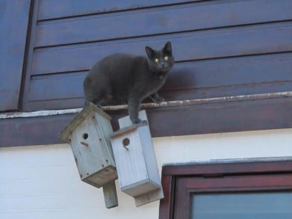 kat-met-vogelhuisjes
