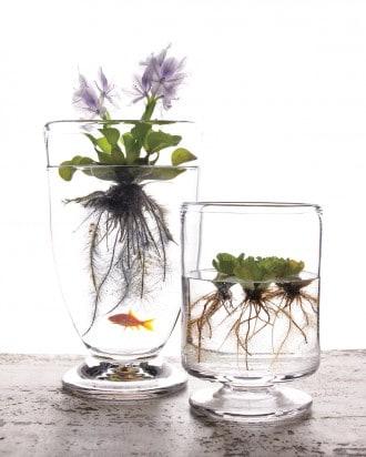 5x inspiratie voor waterrijk groen in je huiskamer tuin en balkon - Indoor water plants list ...