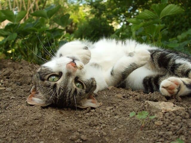 Een tuin is een kattenbak. Althans, volgens sommigen.