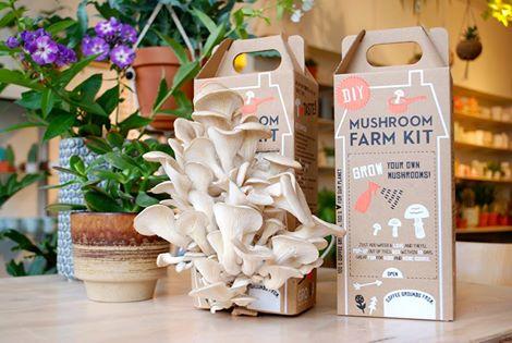 mushroom-diy-farm-kit