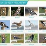 beleef de lente webcams vogels