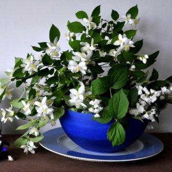 Een betere nachtrust met deze 5 planten in de slaapkamer | Tuin en ...