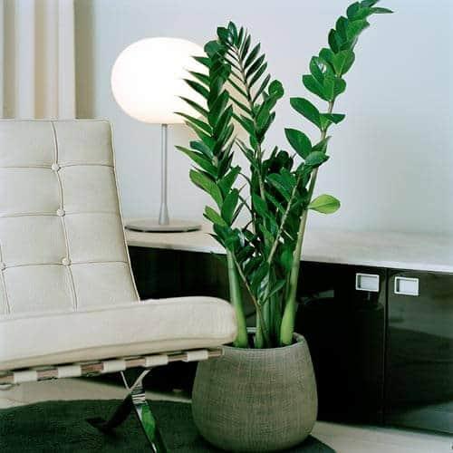 5 ideale kamerplanten voor in een donker huis tuin en balkon. Black Bedroom Furniture Sets. Home Design Ideas