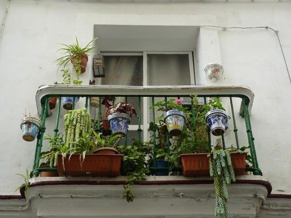 tuinvraag welke planten zijn goed voor op het balkon tuin en balkon. Black Bedroom Furniture Sets. Home Design Ideas