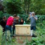 bijenkast van wellbeeing