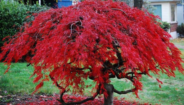 Bomen In Tuin : Een boom voor elke tuin want bomen zijn cool tuin en balkon