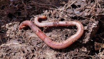 bodemleven verbeteren door wormenpakketten