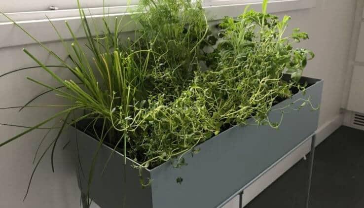 indoor kruidentuintje ferm living kruidenbak